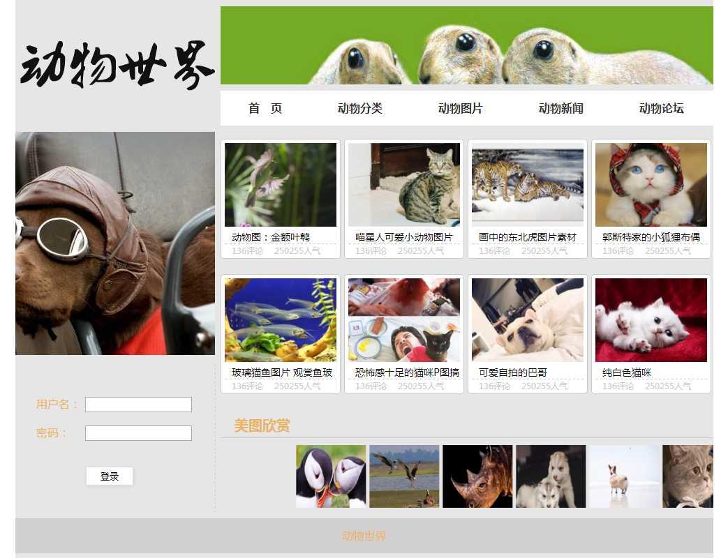 动物世界,网页静态页html切图下载